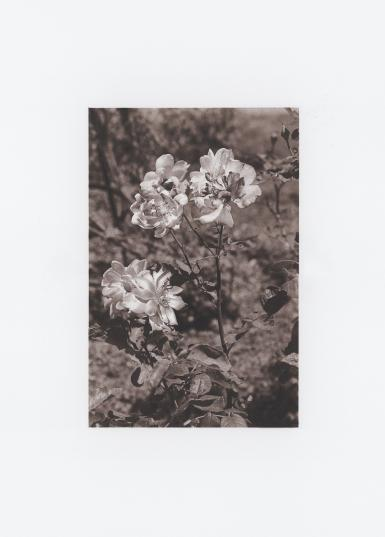 Ambulo in hortis ©Roman Moriceau