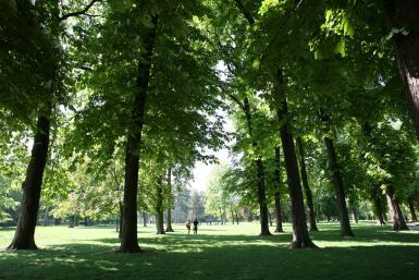 Grands arbres du parc de la roseraie du Val-de-Marne