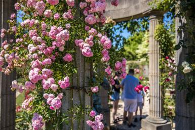 la Roseraie du Val-de-Marne, conservatoire de roses anciennes